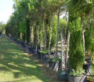 Manutenzione piante