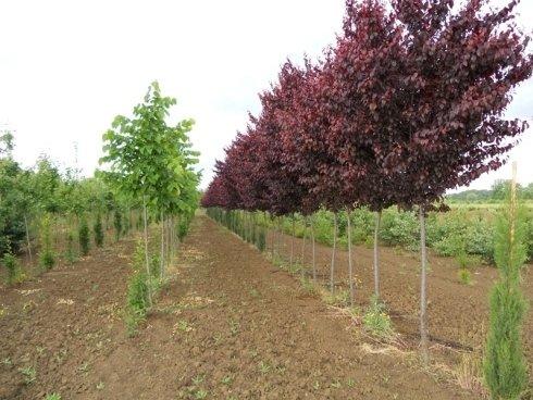 alberi di ogni misura