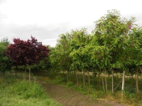 vivaio per alberi da frutta