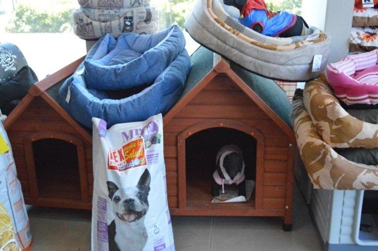 articoli cani e gatti