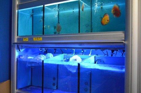 acquari e pesci per appartamento