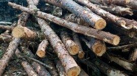 legna di fqaggio