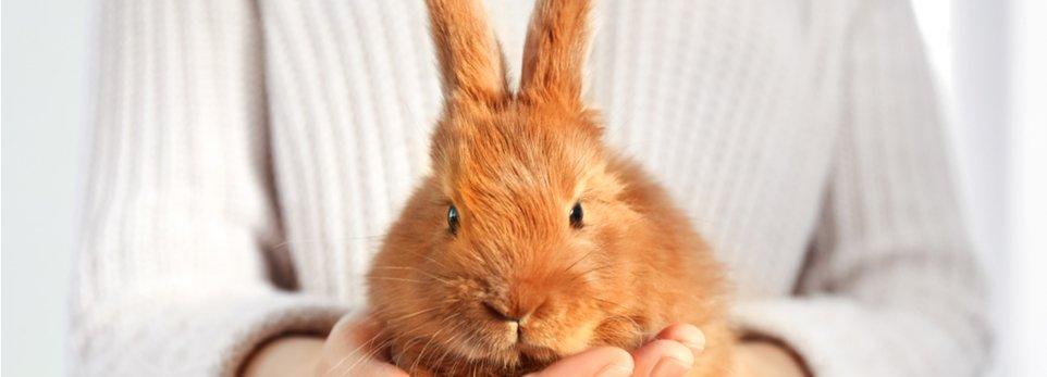 un coniglietto domestico