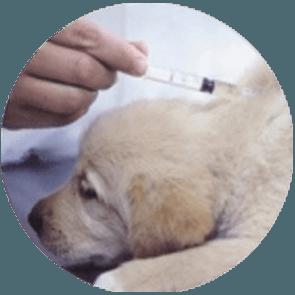 vaccini-contro-leishmaniosi