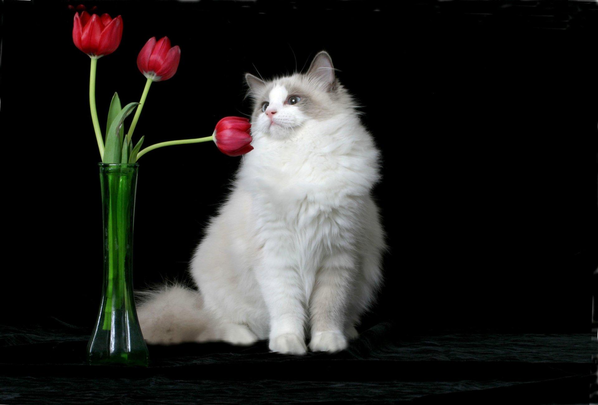 Tampa Cat Groomer Hillsborough County Mobile Cat Grooming