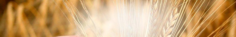 sementi Montepulciano