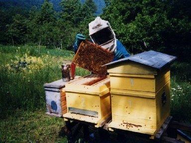 prodotti per apicoltura