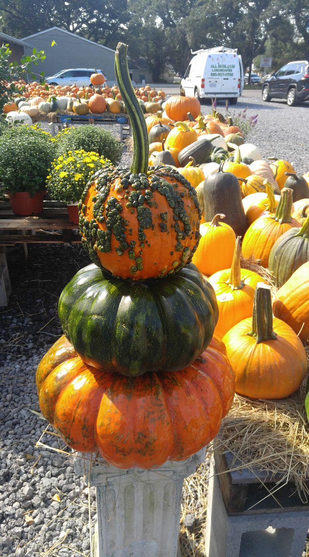 landscaping service southport nc garden center garden shop