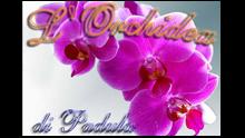 L'orchidea Padula