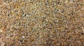 farine di mais per zootecnia, foraggi, granaglie