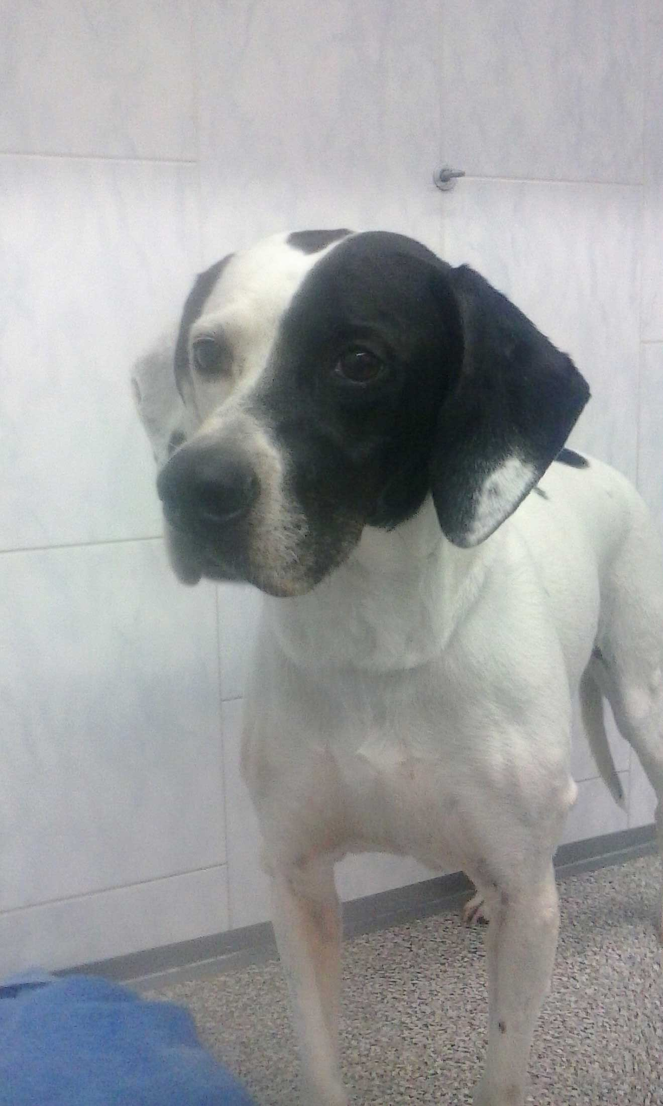 cane con muso metà nero metà bianco
