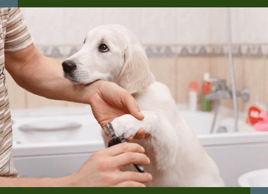 Dog Grooming Hamburg, NY
