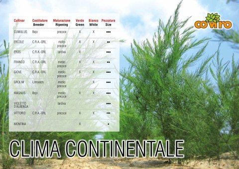 asparago continentale