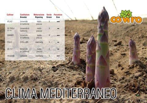 asparago mediterraneo