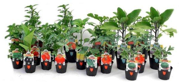 Vendita al dettaglio di piante e fiori