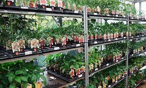 Piante e prodotti da orto