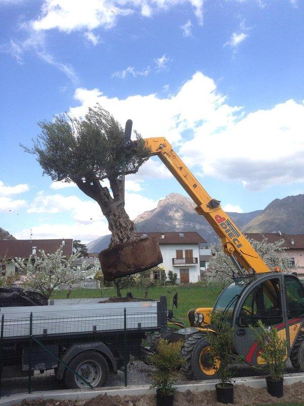Piantumazione alberi