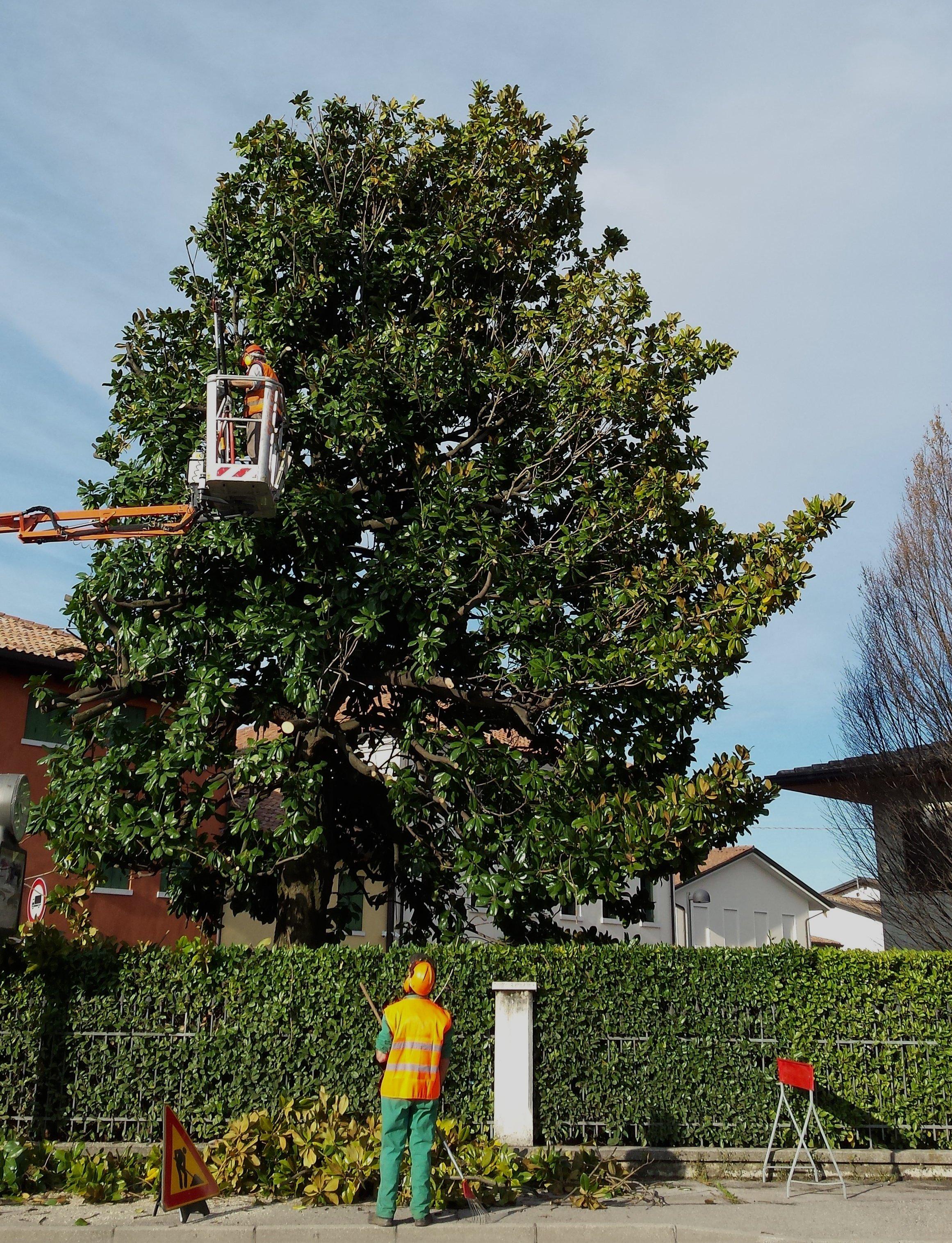 manutenzione di un albero