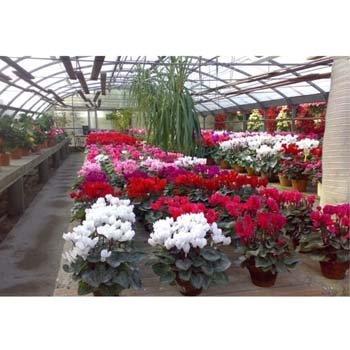 piante in vaso in fiore