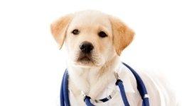 sterilizzazione cani