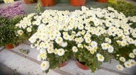 vendita fiori da terrazzo