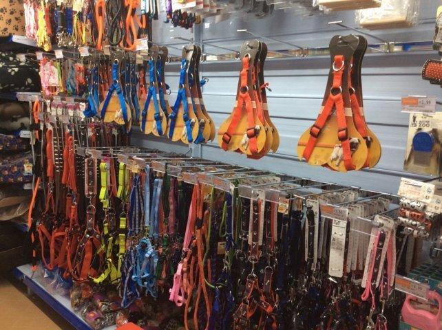 Collari e guinzagli per cani al negozio Mondo Convenienza