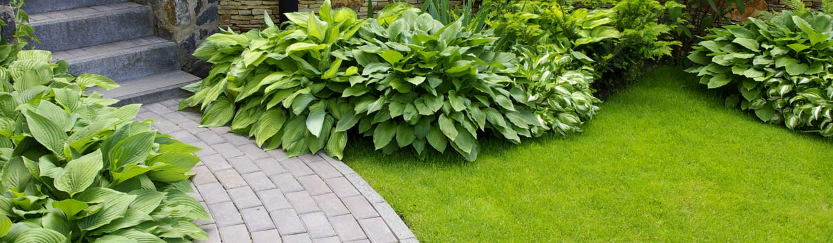 anytime contracting landscaping