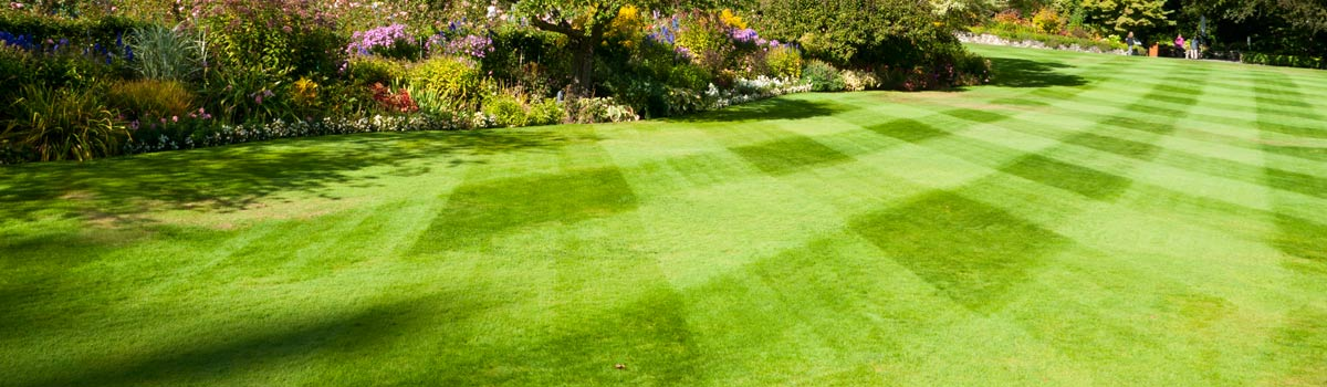 anytime contracting green natural lawn