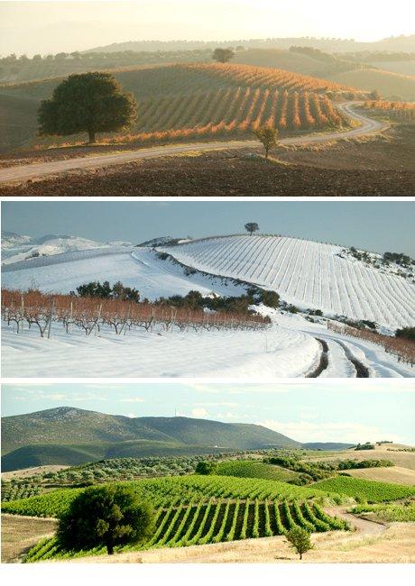 Single Vineyard Zygos