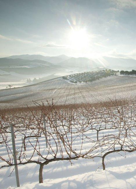 Single Vineyard Drisbay