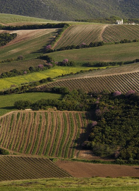 Single Vineyard Raches Galanou