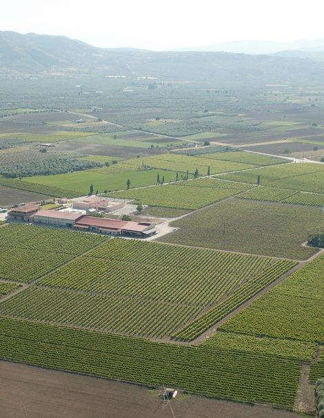 Single Vineyard Houlevena