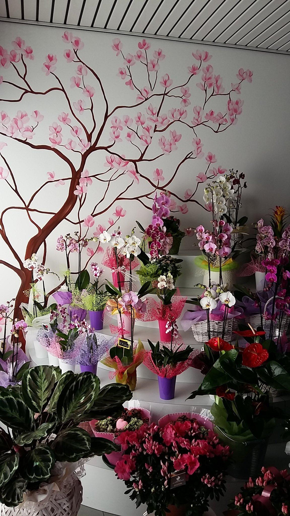 primo piano di orchidee su espositore a gradini