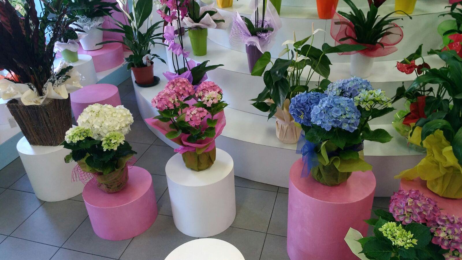 ortensie su tavolini in primo piano, orchidee in secondo piano