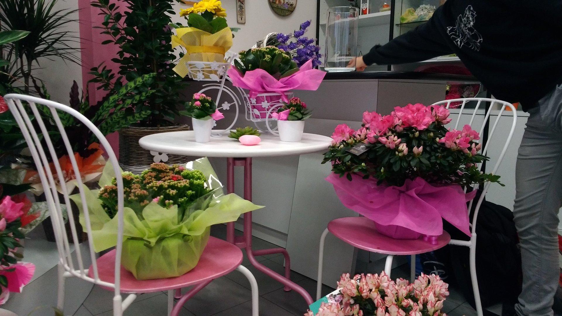 piante su tavolini di fianco al bancone di un negozio di fiori