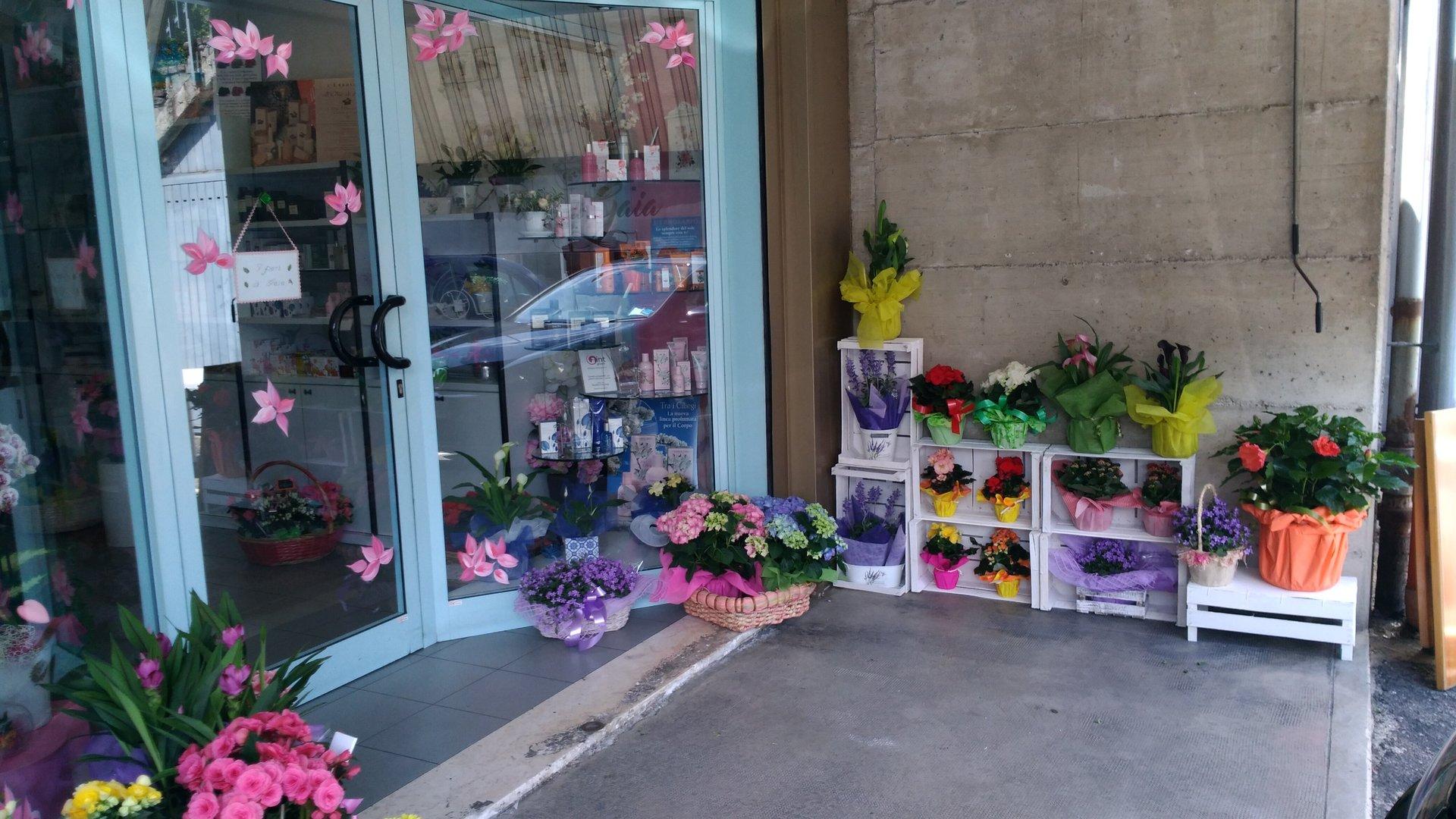 piante davanti all'entrata di un negozio di fiori