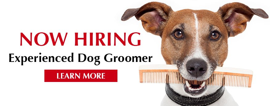 Now Hiring at Wags & Whiskers in La Crosse, WI - Experienced Dog Groomer