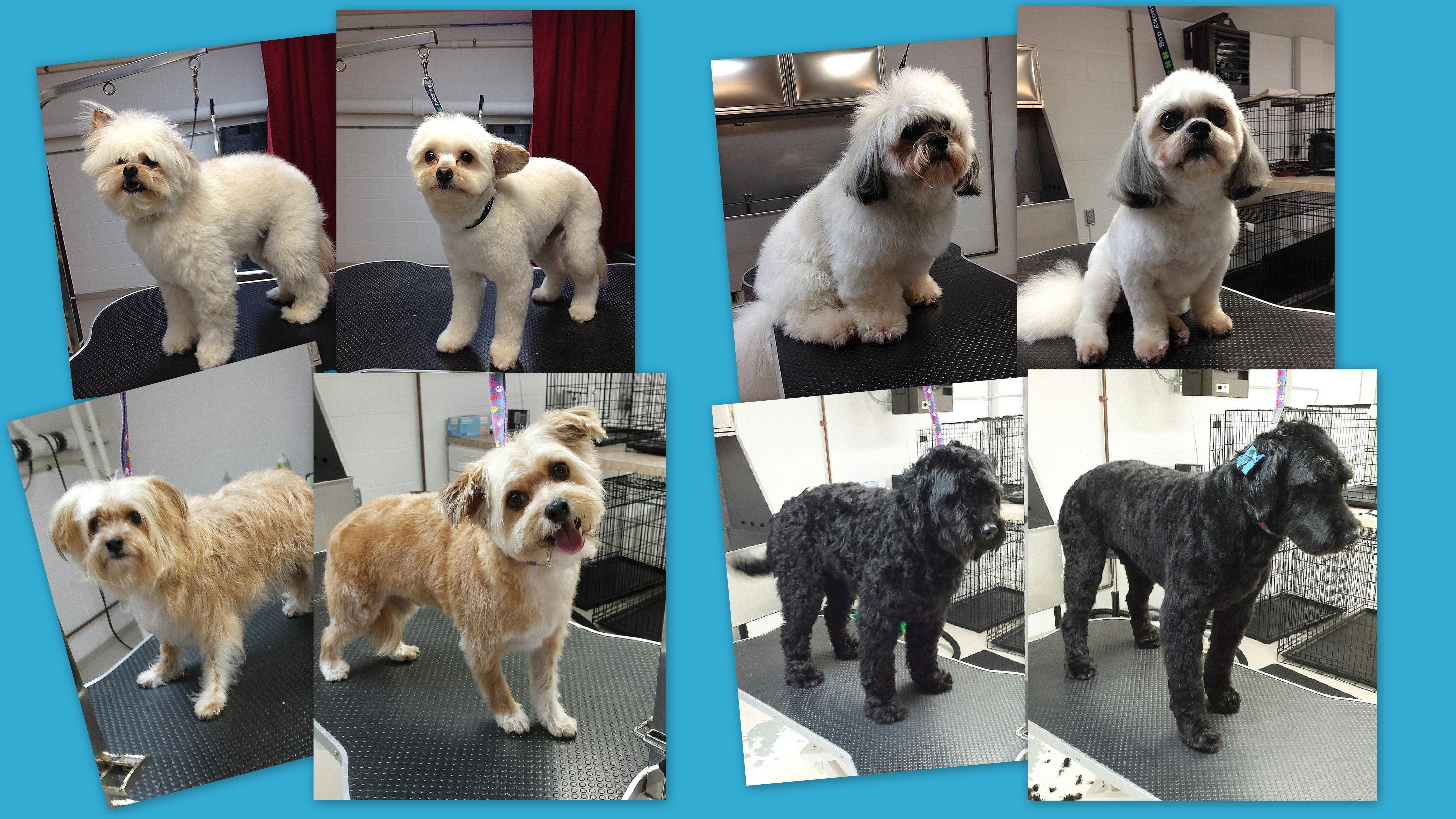 Dog grooming at Wags & Whiskers in La Crosse, WI