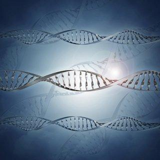 Vari DNA
