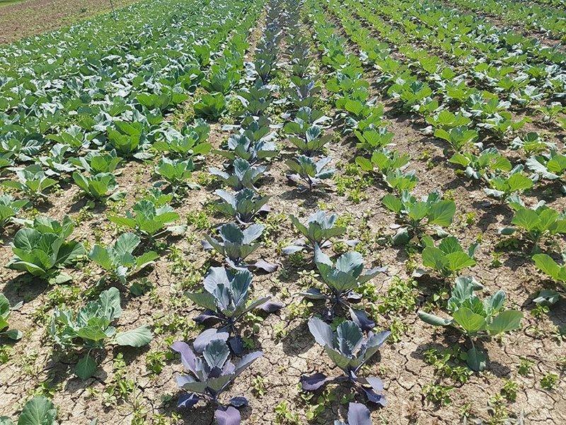 serra coltivazioni