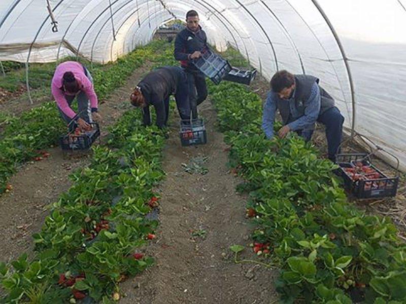 agricoltori in una serra