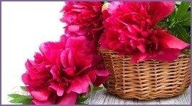 fiori per cresime