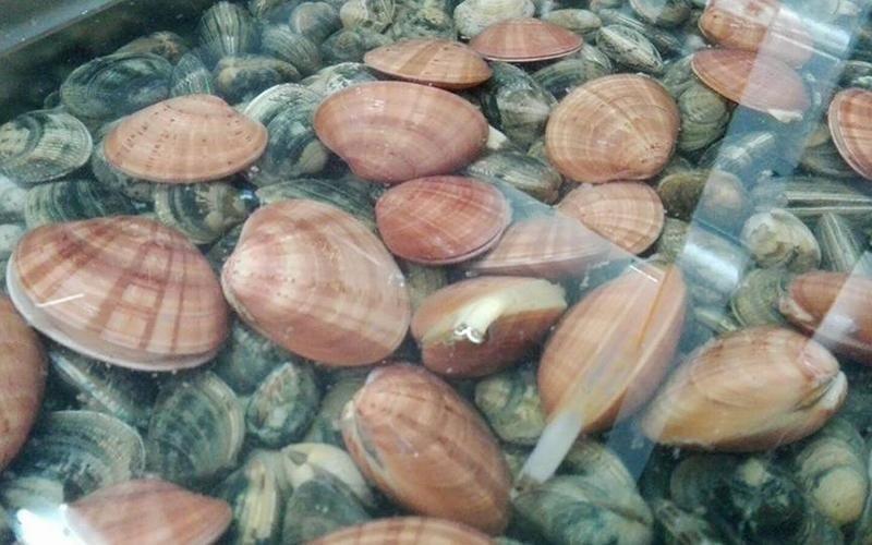 molluschi freschi