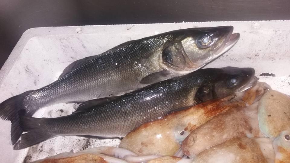 pescato del mediterraneo