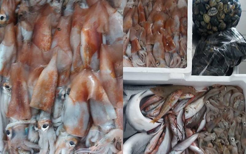 pescato di stagione