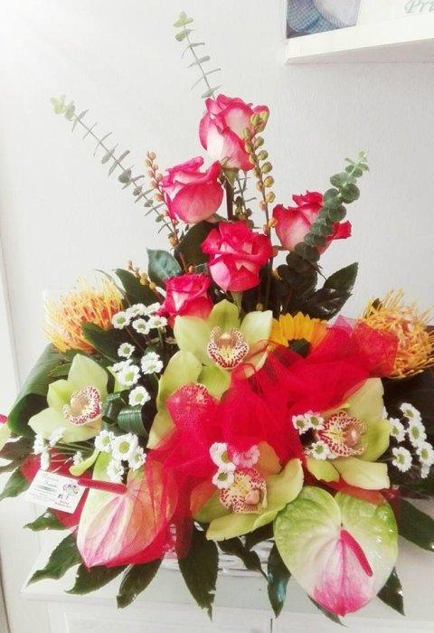 anthurium, orchidee, rose e settembrini