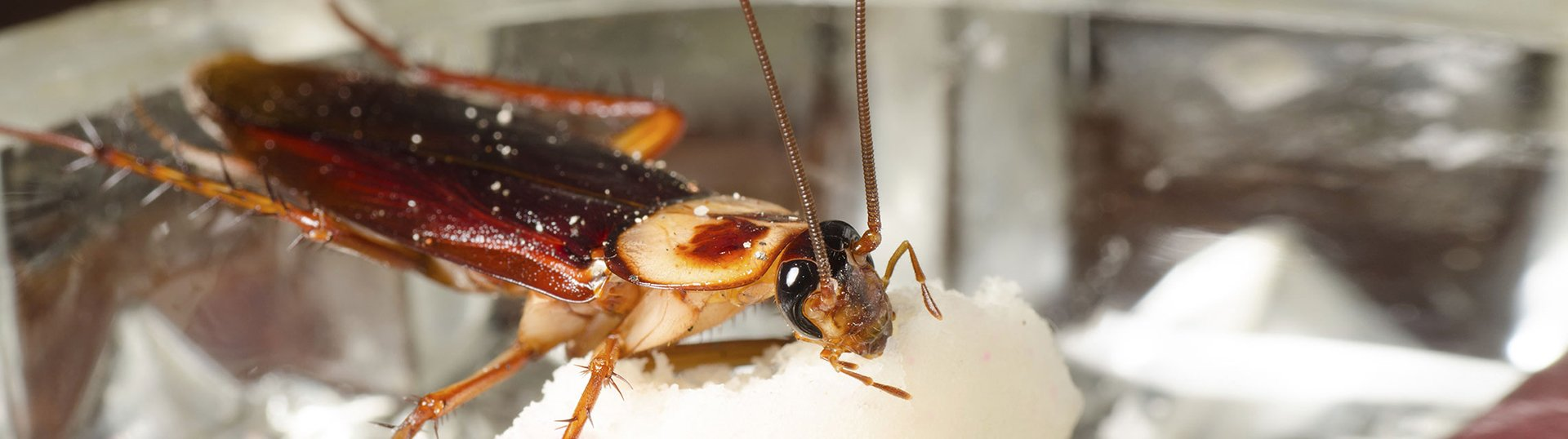 An insect feeding on a sugar cube