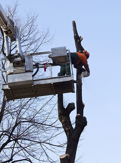 nuleaf tree services tree removing service