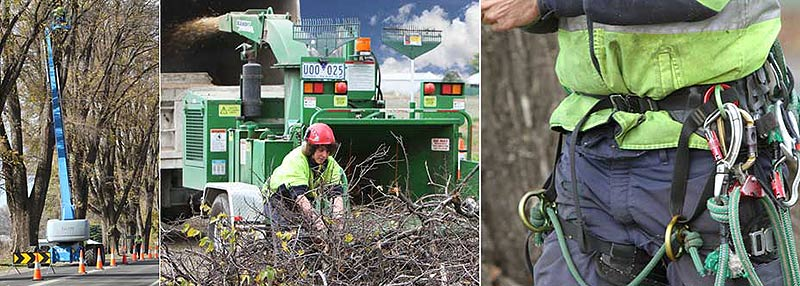 nuleaf tree services tree services