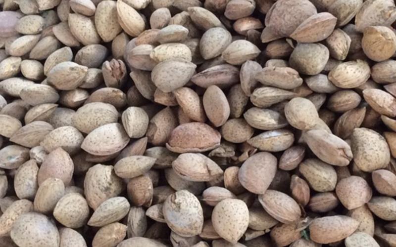 Almond company